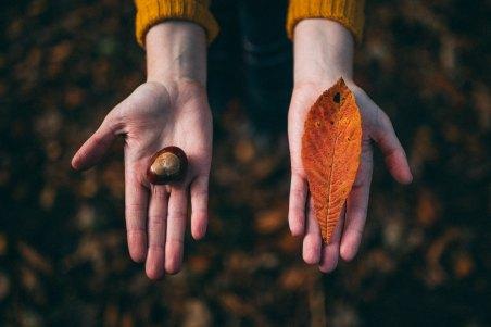 Leaf and conker.jpg